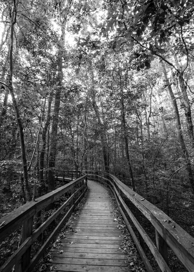 CongareeNationalPark-5