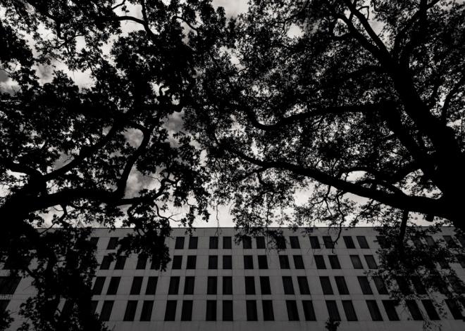 Savannah October-31